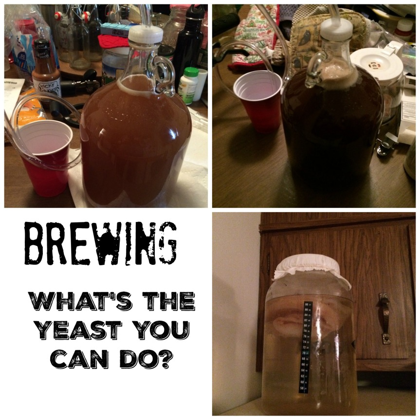 It's the Yeast I Can Do:  A Primer onBrewing