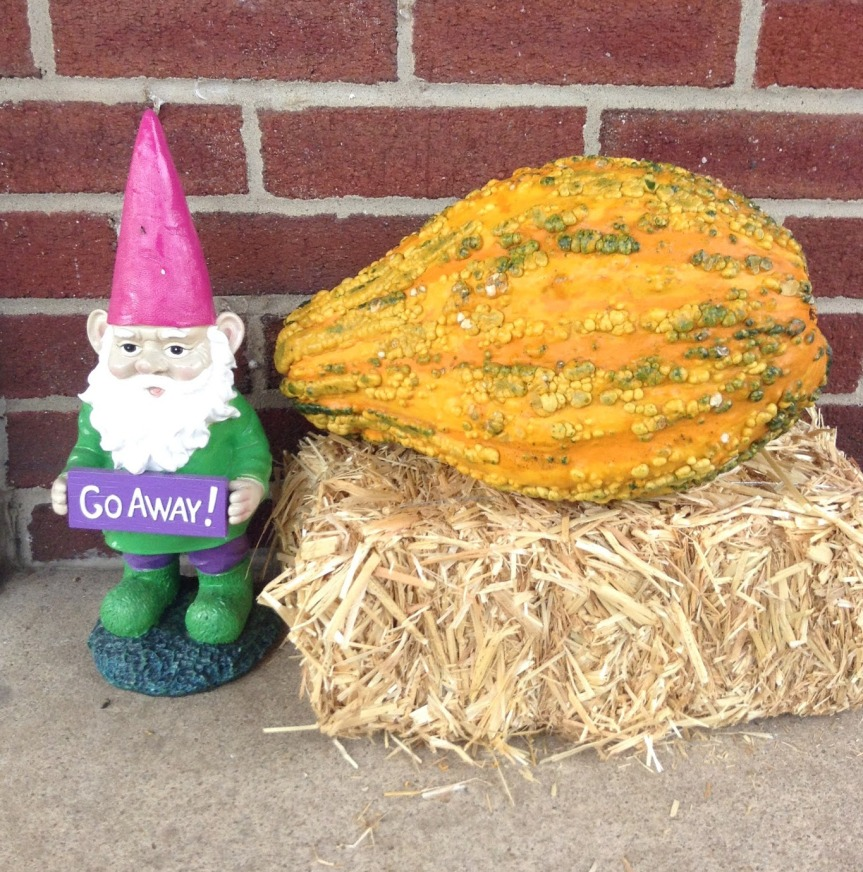 Gnome, and warty gourd on a hay bale.