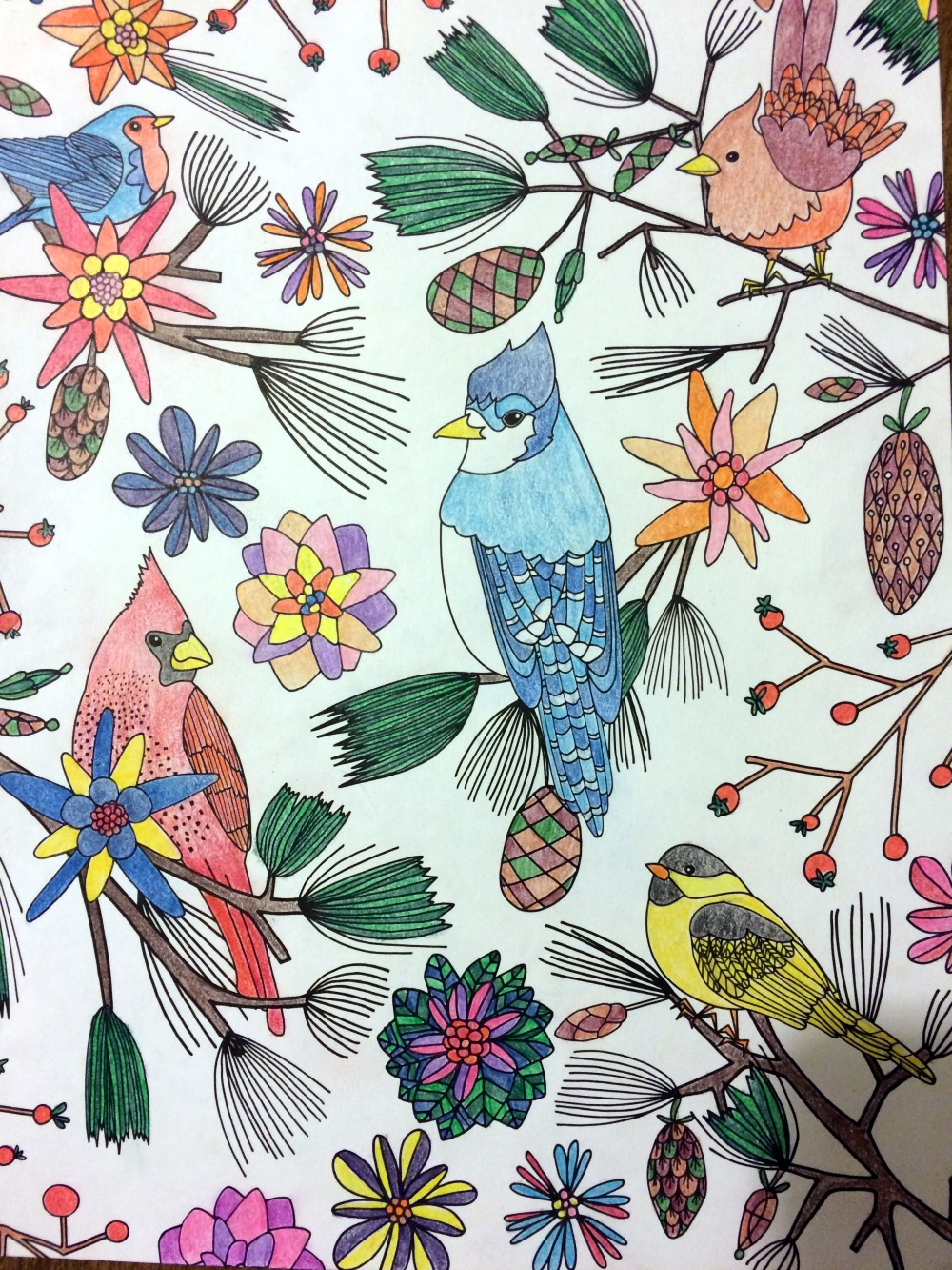 Birds page from the Winter 2017 Taste of Home coloring book