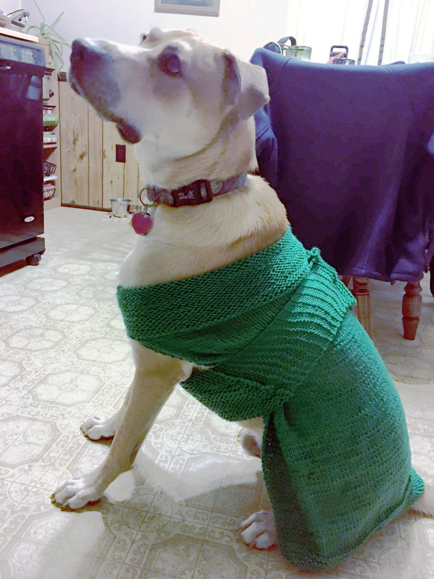Sputnik in his new sweater that knit for him.
